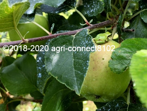 f:id:agri-connect:20200716225907j:plain
