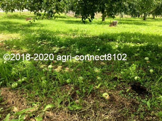 f:id:agri-connect:20200726165754j:plain