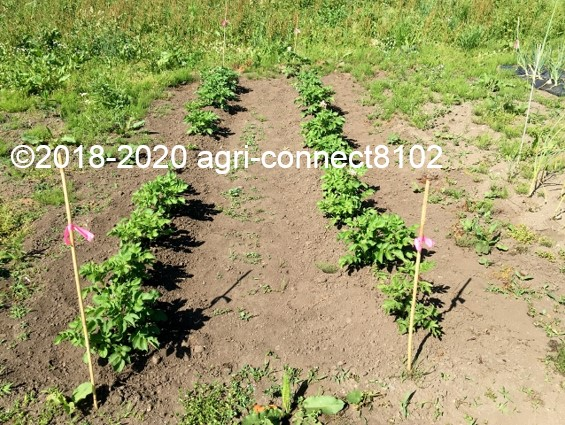 f:id:agri-connect:20200802230517j:plain