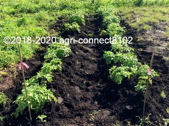 f:id:agri-connect:20200802230923j:plain