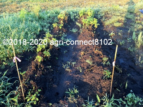 f:id:agri-connect:20200802231134j:plain