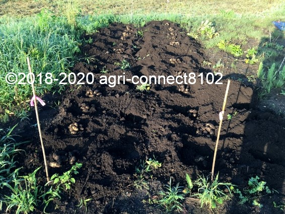 f:id:agri-connect:20200802231139j:plain