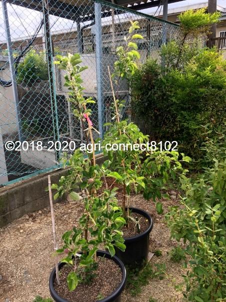 f:id:agri-connect:20200803212621j:plain