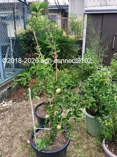 f:id:agri-connect:20200803212712j:plain