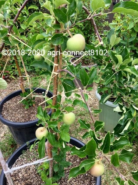 f:id:agri-connect:20200803212716j:plain