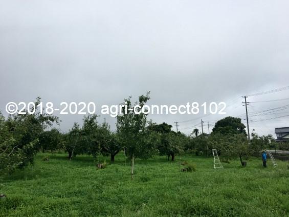 f:id:agri-connect:20200806233539j:plain