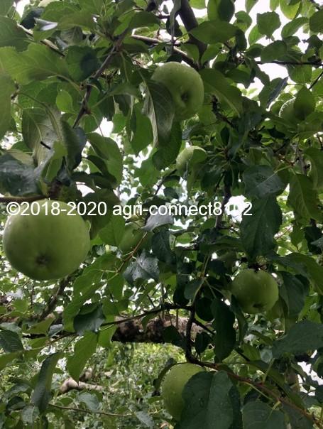 f:id:agri-connect:20200806233715j:plain