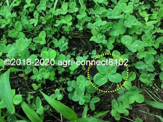 f:id:agri-connect:20200806233829j:plain