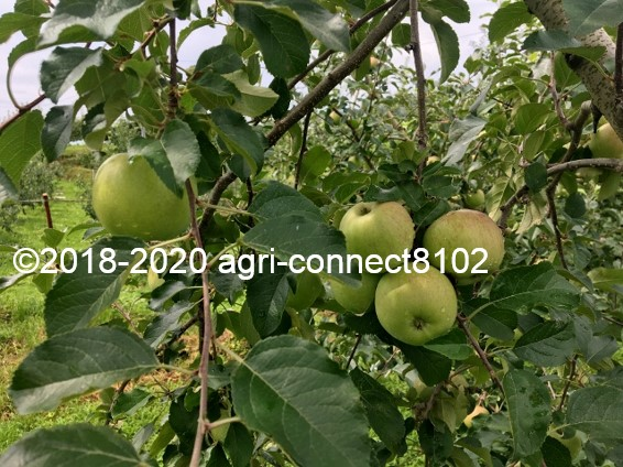 f:id:agri-connect:20200806234244j:plain