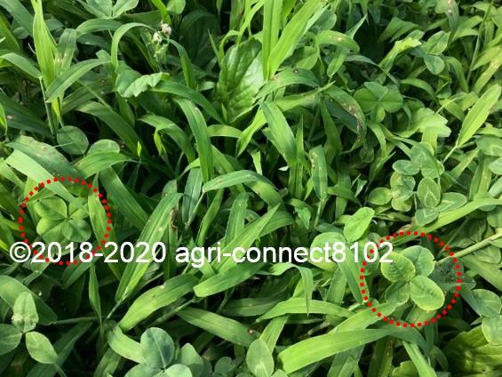 f:id:agri-connect:20200806234445j:plain