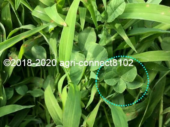 f:id:agri-connect:20200806234550j:plain