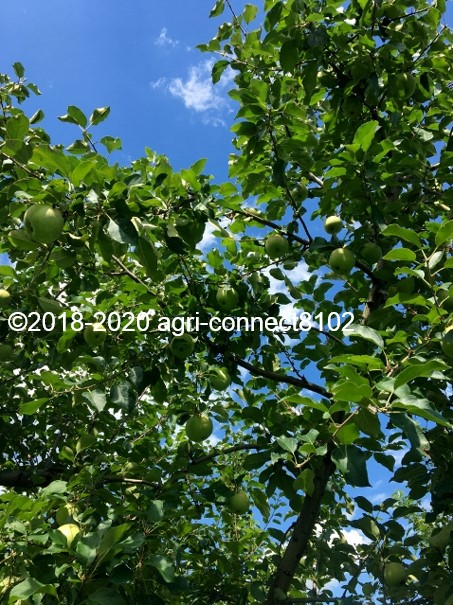 f:id:agri-connect:20200806234850j:plain
