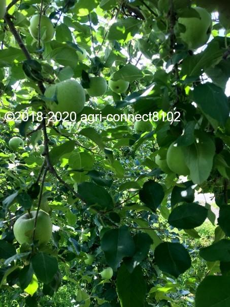 f:id:agri-connect:20200806234855j:plain