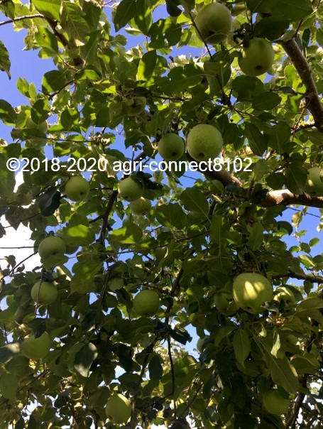 f:id:agri-connect:20200806234900j:plain