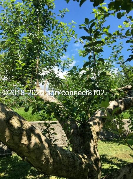 f:id:agri-connect:20200806235511j:plain