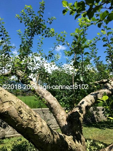 f:id:agri-connect:20200806235516j:plain