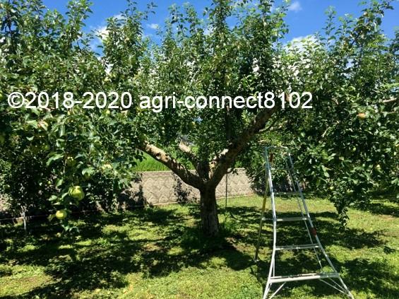 f:id:agri-connect:20200806235913j:plain