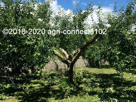f:id:agri-connect:20200806235918j:plain
