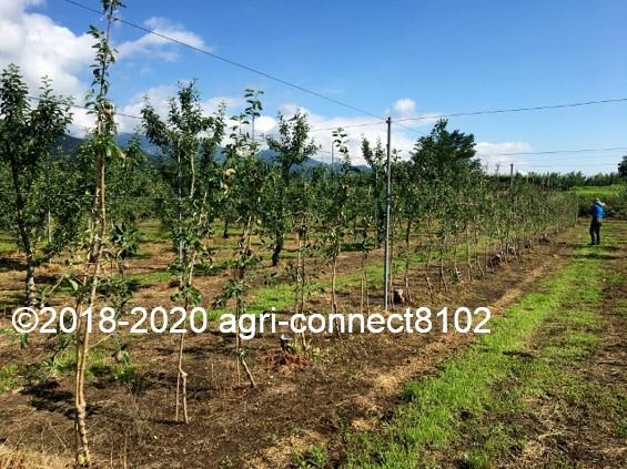 f:id:agri-connect:20200808211454j:plain