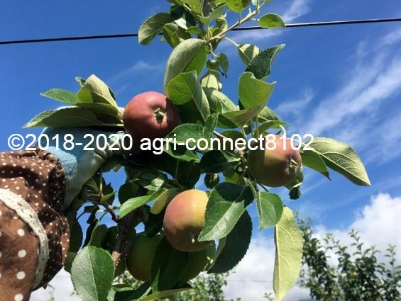 f:id:agri-connect:20200808211456j:plain