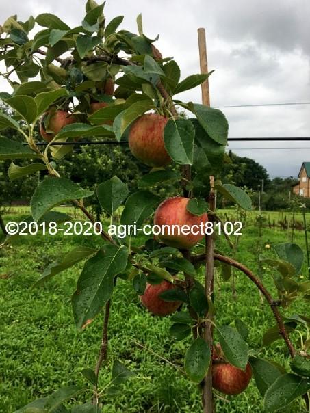 f:id:agri-connect:20200808211635j:plain