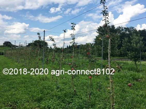 f:id:agri-connect:20200808212353j:plain