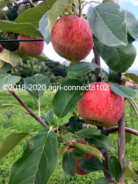 f:id:agri-connect:20200808212358j:plain