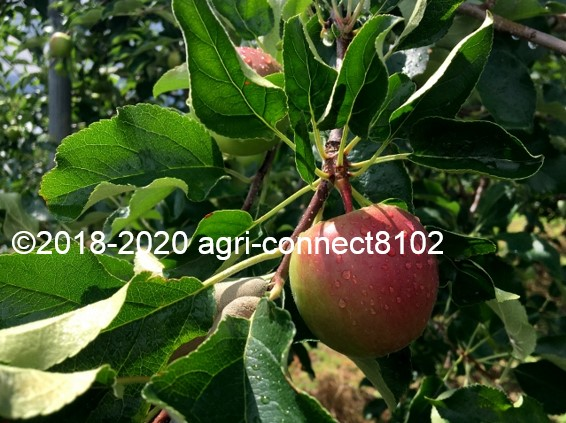 f:id:agri-connect:20200808214641j:plain