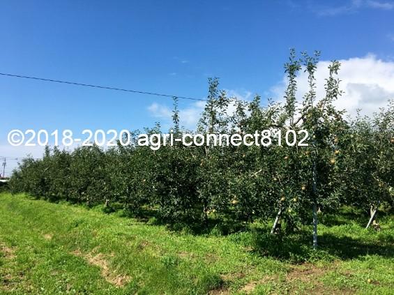 f:id:agri-connect:20200808215240j:plain