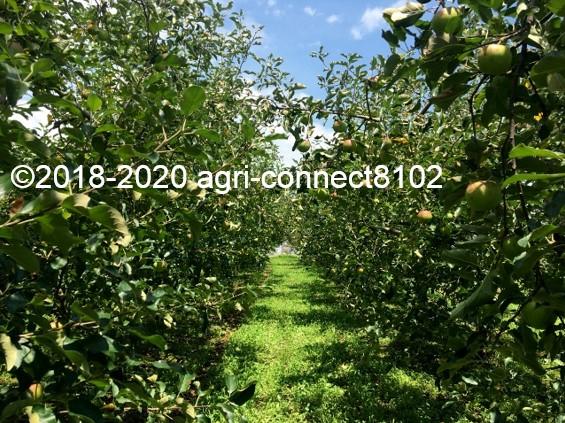 f:id:agri-connect:20200808215244j:plain