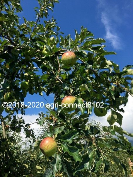 f:id:agri-connect:20200808215246j:plain