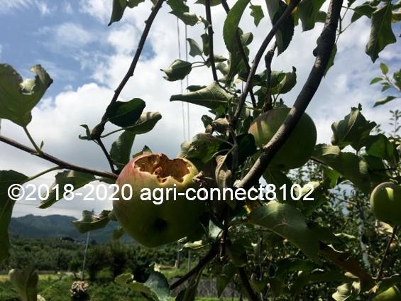 f:id:agri-connect:20200808215817j:plain