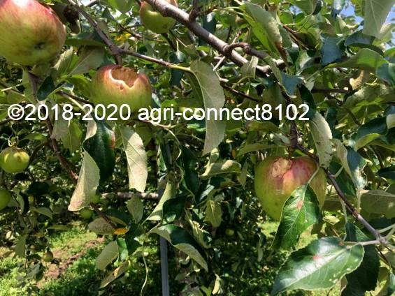 f:id:agri-connect:20200808215823j:plain