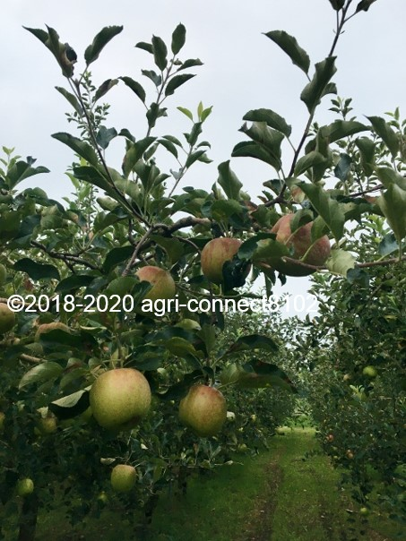 f:id:agri-connect:20200808220304j:plain