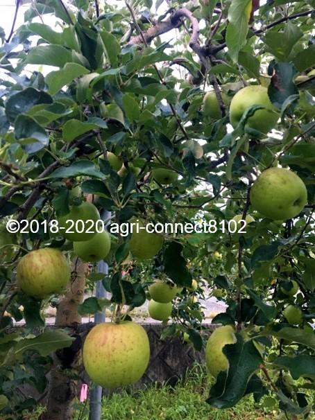 f:id:agri-connect:20200808220308j:plain