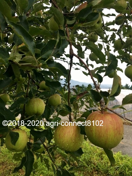 f:id:agri-connect:20200808220312j:plain