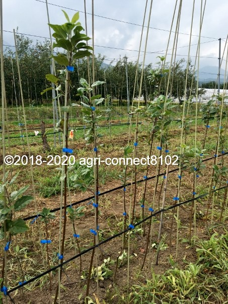 f:id:agri-connect:20200809222637j:plain