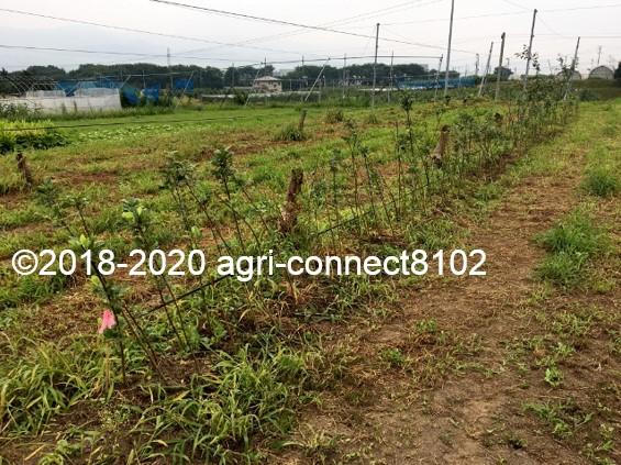 f:id:agri-connect:20200809222916j:plain