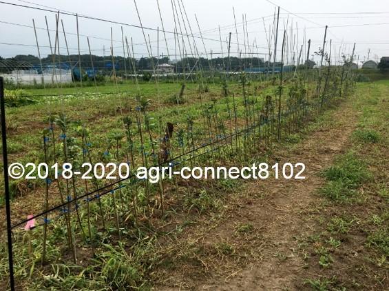 f:id:agri-connect:20200809222921j:plain