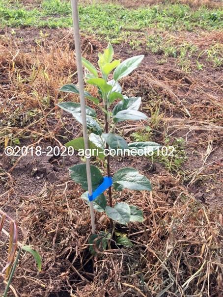 f:id:agri-connect:20200810120354j:plain