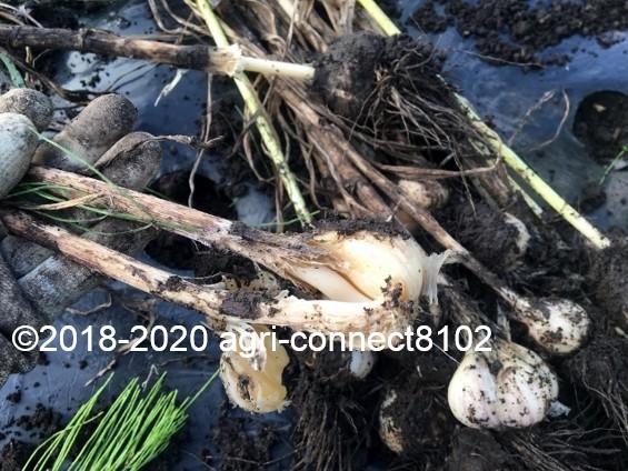 f:id:agri-connect:20200817234252j:plain