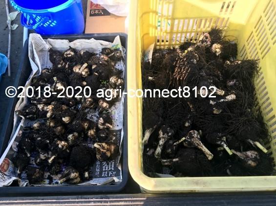 f:id:agri-connect:20200817234255j:plain