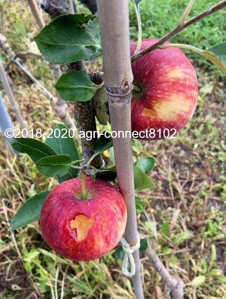 f:id:agri-connect:20200822205714j:plain