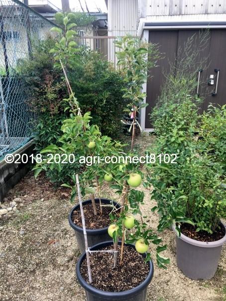 f:id:agri-connect:20200830223120j:plain