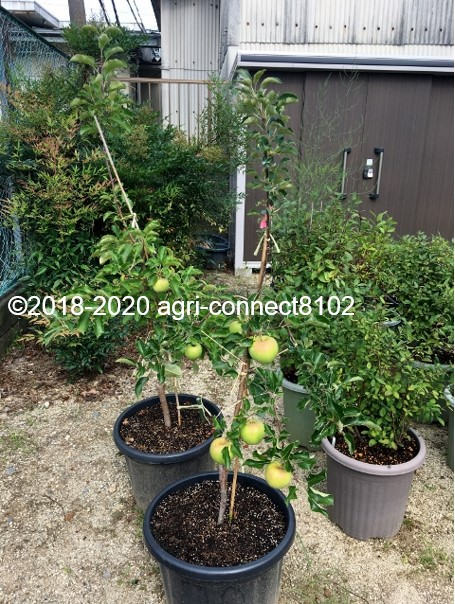f:id:agri-connect:20200830223150j:plain