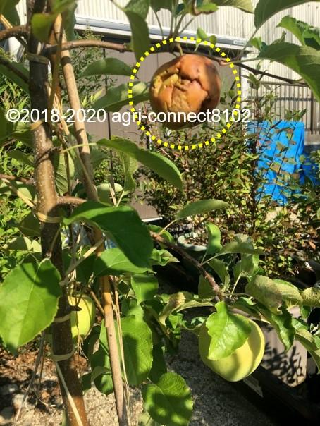 f:id:agri-connect:20200830223439j:plain