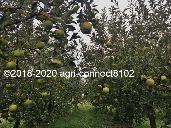 f:id:agri-connect:20200904225549j:plain