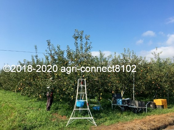 f:id:agri-connect:20200904225841j:plain