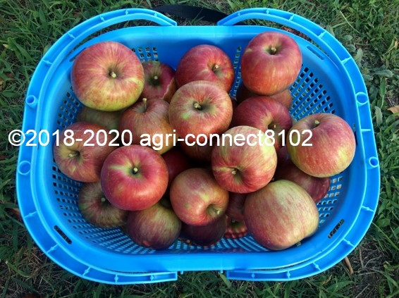 f:id:agri-connect:20200904225956j:plain