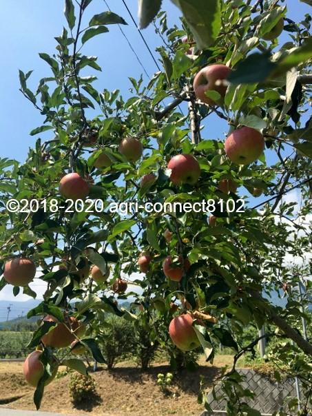 f:id:agri-connect:20200904230956j:plain